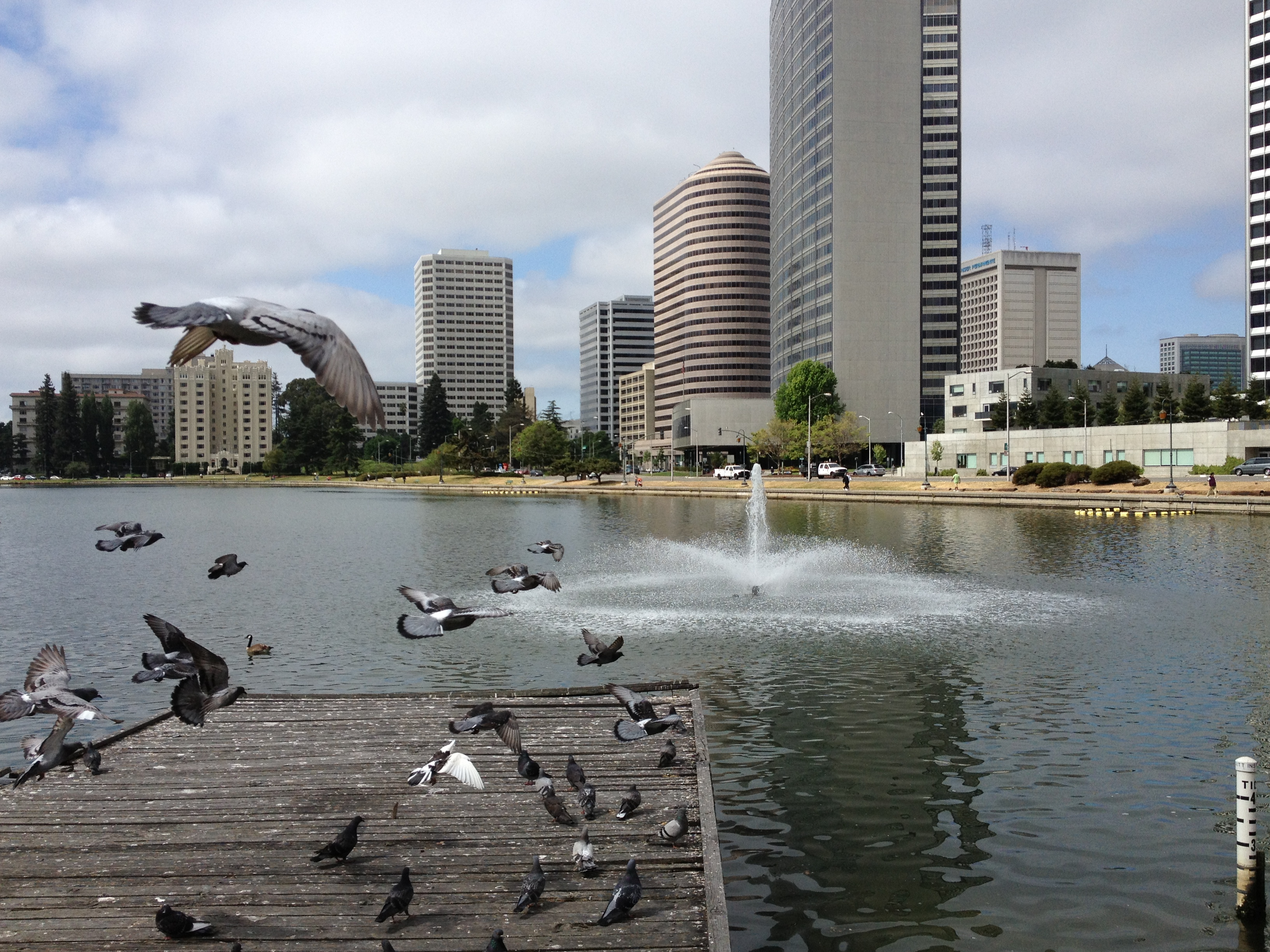 Lake Merritt, downtown Oakland, and pigeons