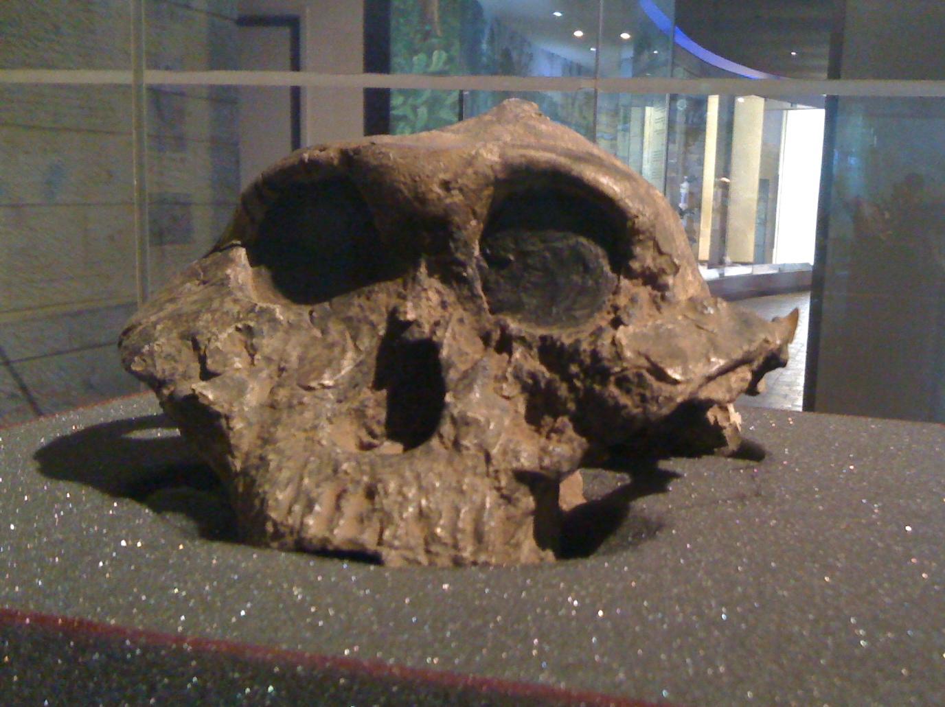 An ancestor in Nairobi